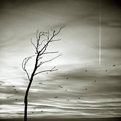 Silhouette Birds In Flight Print by Luis Mariano González