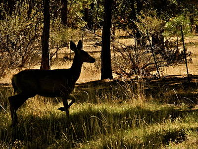 Photograph - Silhouette Of A Doe In The Woods by Kirsten Giving