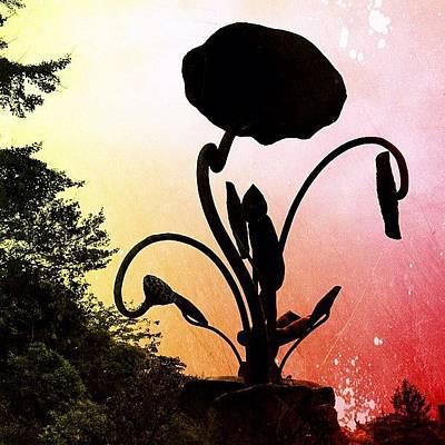 Bronze Wall Art - Photograph - Silhouette Of Bronze Flower by Marc Gascoigne