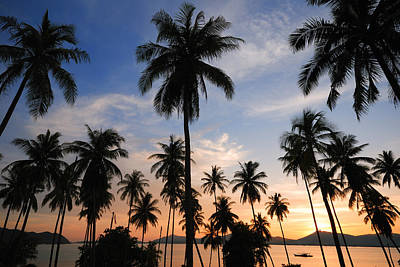 Silhouette Of  Coconut Tree Original
