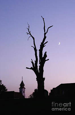 Moonrise At Sunset Photograph - Silhouette Of Split Tree by Roberto Westbrook