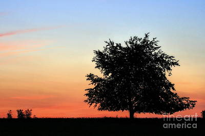 Photograph - Make People Happy - Photograph Of Tree Silhouette Against A Colorful Summer Sky by Angela Rath