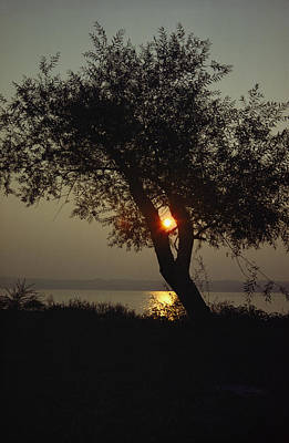 Silhouette Of Willow Tree At Sunset Art Print by Al Petteway
