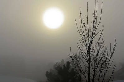 Photograph - Silhouetted Birds In The Fog by Barbara Dean