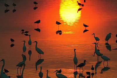 Silhouetted Wading Birds Feed Art Print by George Grall