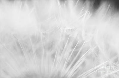 Silky Softness Art Print