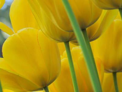 Silky Yellows Art Print