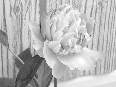 Photograph - Silver Beauty by Rhonda Barrett