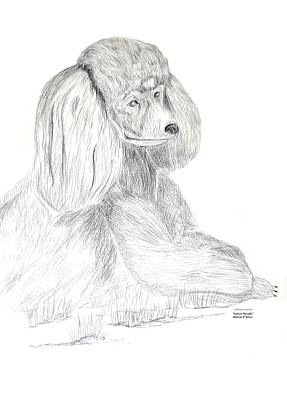 Silver Poodle Art Print by Maria Urso