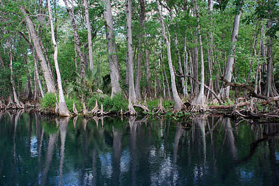 Silver River Photograph - Silver Riverscape by Skip Willits