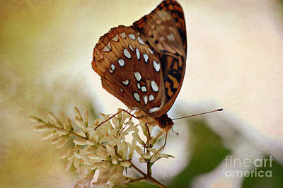 Photograph - Silver Spotted  Skipper Butterfly by Peggy Franz