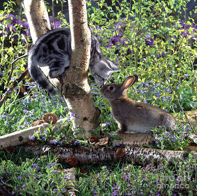 Animal Portraiture Photograph - Silver Tabby And Wild Rabbit by Jane Burton