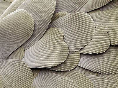 Silverfish Scales, Sem Art Print