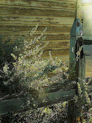 Art Print featuring the photograph Silverleaf In Morning Sun by Louis Nugent