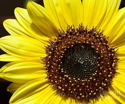 Photograph - Simple Sunflower by Tammy Bullard