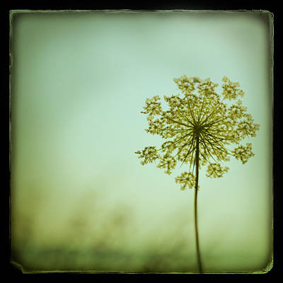 Botanical Photograph - Simplexity by Irene Suchocki