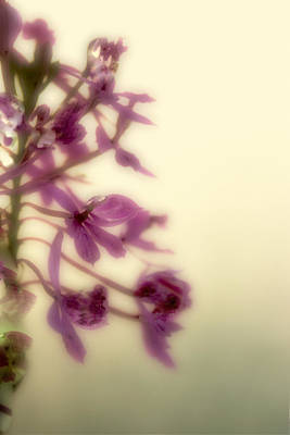 Digital Art - Simplicity by Carol Kinkead