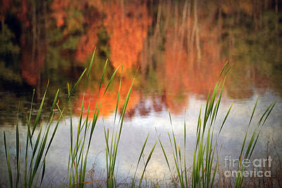 Vivid Fall Colors Photograph - Simplicity by Darren Fisher