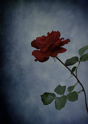 Photograph - The Simplicity Of Love by Diane Schuster
