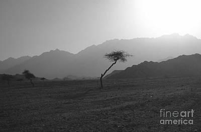 Sinai Desert Art Print