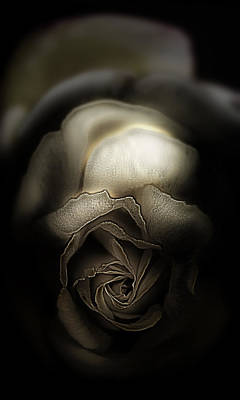 Since It Was A Rose Art Print