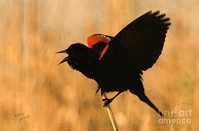 Blackbird Photograph - Singing At Sunset by Betty LaRue