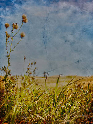 Singing In The Grass Art Print by Empty Wall