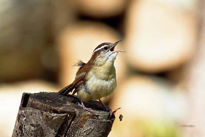 Photograph - Singing Wren by Steven Llorca
