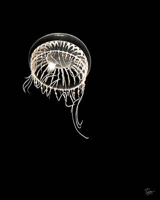 Photograph - Single Jellyfish by Endre Balogh