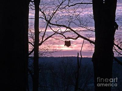 Photograph - Single Leaf At Sunrise by Christian Mattison