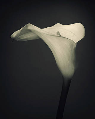 Barber Photograph - Single Lilly Flower by Ian Barber