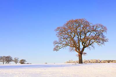 From The Kitchen - Single oak tree snow landscape by Richard Thomas
