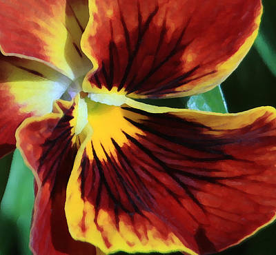 Photograph - Single Pansy by Donna Corless