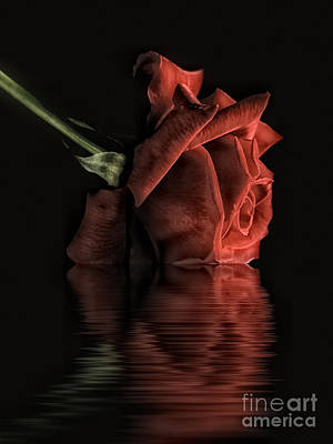 Blending Photograph - Single Red Rose by Lee-Anne Rafferty-Evans