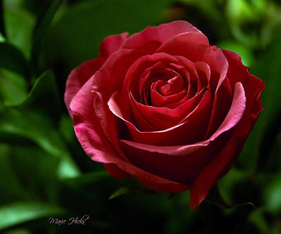 Photograph - Single Red Rose by Marie Hicks