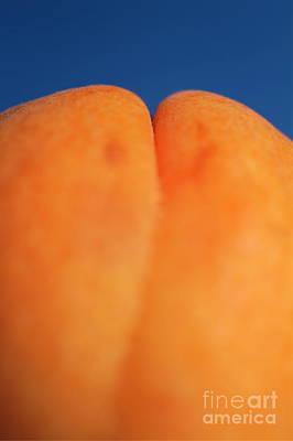 Single Ripe Apricot Art Print by Sami Sarkis
