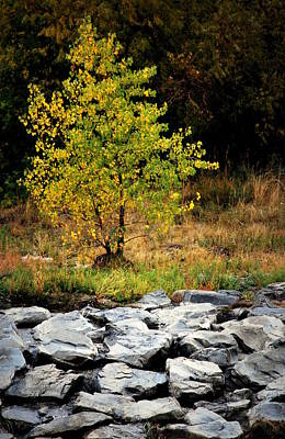 Photograph - Single Tree by Amee Cave