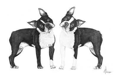 Drawing - Boston Terriers by Murphy Elliott