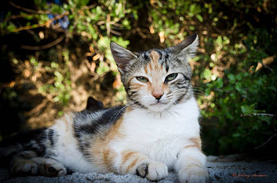 Photograph - Sitting Cat by Johnny Sandaire