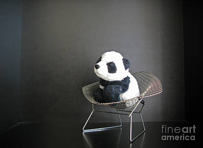Photograph - Sitting Meditation. Floyd From Travelling Pandas Series. by Ausra Huntington nee Paulauskaite
