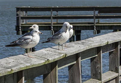 Photograph - Sitting On The Dock Of The Bay by Theodore Jones