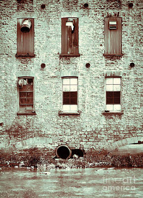 Photograph - Six Again by Traci Cottingham