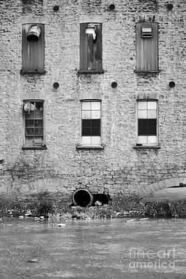Photograph - Six by Traci Cottingham