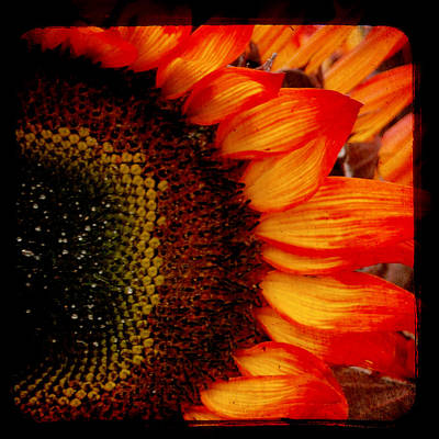 Yellow And Orange Sunflower Photograph - Sizzle by Sharon Coty
