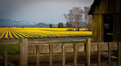 Festival Photograph - Skagit Valley Farm by Mike Reid