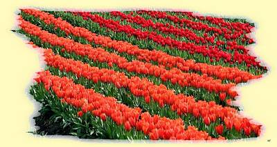 Digital Art - Skagit Valley Tulips 7 by Will Borden