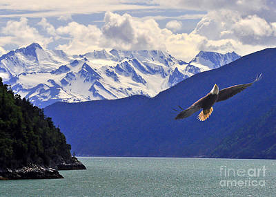Skagway Bald Eagle Art Print by Jack Moskovita