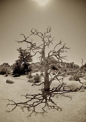 Skeletal Tree Original