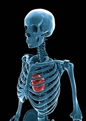 Skeleton And Heart, Artwork Art Print by Andrzej Wojcicki