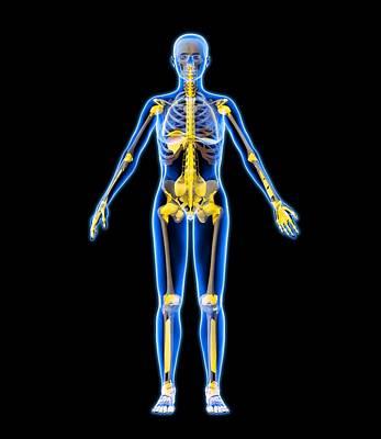 Skeleton And Ligaments, Artwork Art Print by Roger Harris